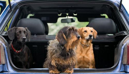 Best Vehicles For Your Dog